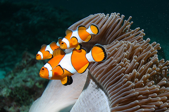 Подводный мир таиланда для всей семьи